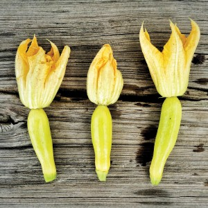 Baby yellow squash with blossoms