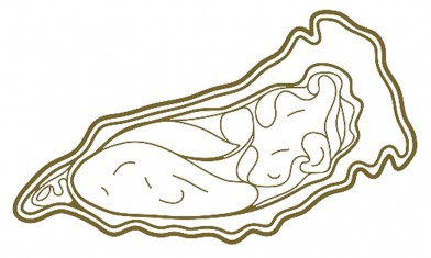 oyster.outline