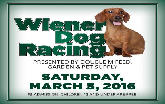 wiener-dog-racing-web